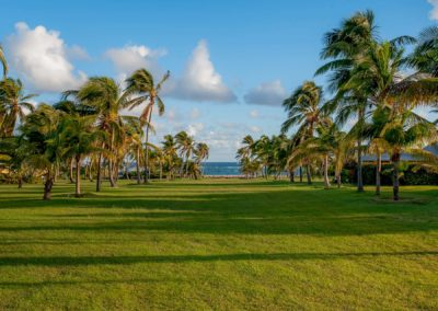 The spectacular view down the AVenue of Palms to the beach and ocean beyomnd at Nisbet Plantation Nevis